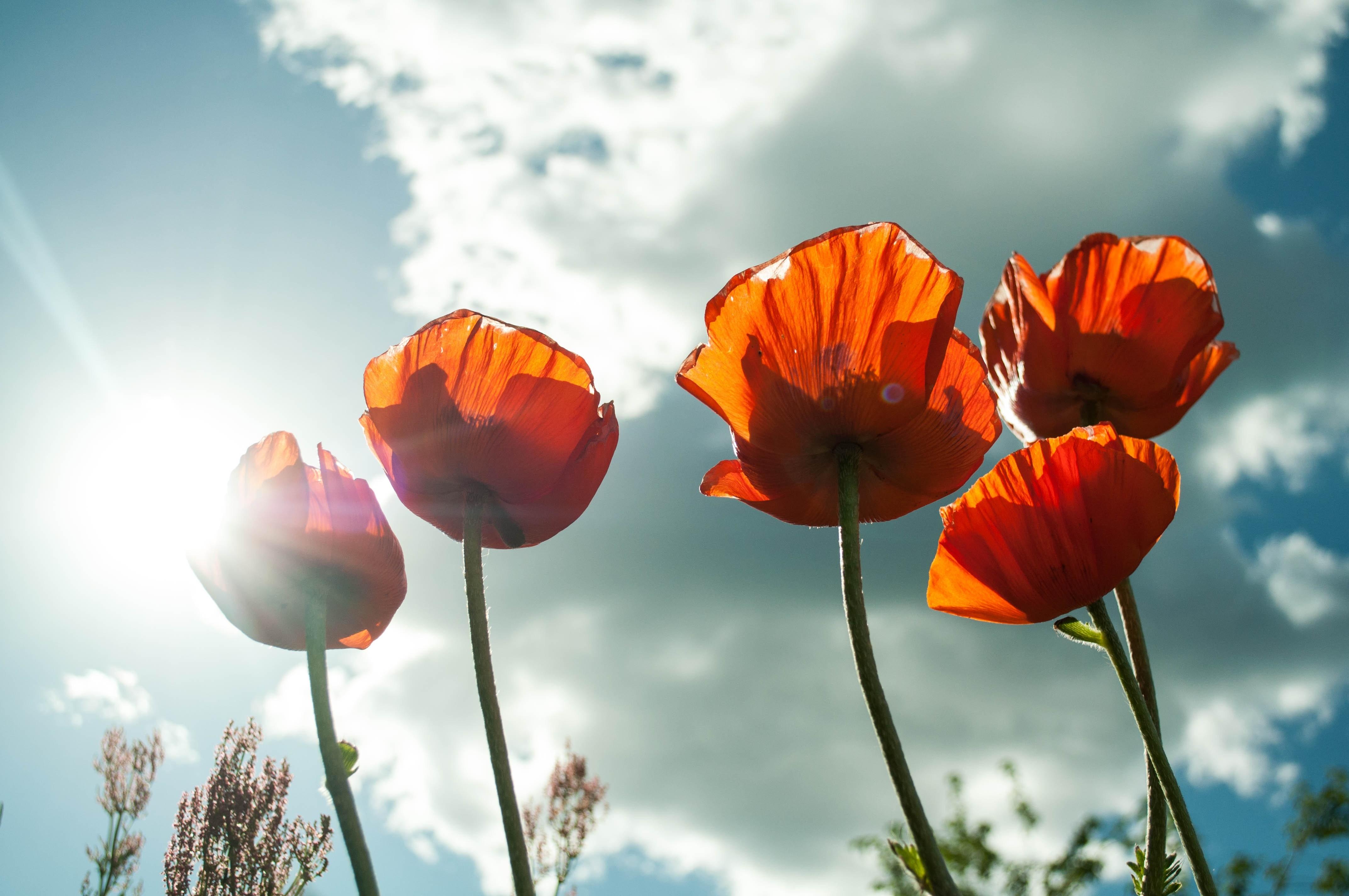 bloom-blossom-flora-53013